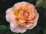 五颜六色的美丽鲜花高清经典壁纸