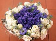 高清室内小清纯花朵桌面壁纸