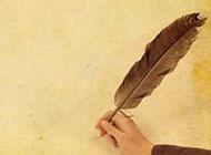 黄色纸张上的羽毛背景高清图片