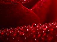 簡約雨后清新花卉露珠精美個性壁紙