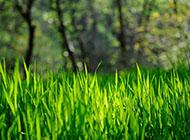 小草春天风景精美桌面壁纸