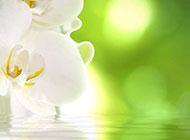 白色蘭花精美背景素材圖片