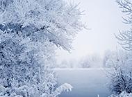 精选简约唯美雪景桌面壁纸