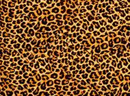 格子豹紋時尚背景圖片