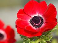 色彩鮮艷唯美花卉特寫高清電腦桌面