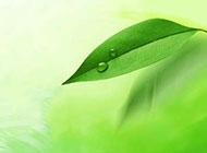 綠色葉子背景高清圖片素材