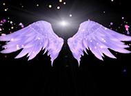 手型紫色翅膀的ppt背景圖