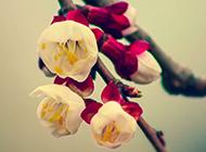 春日清新粉色唯美樱花图片