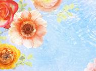 夢幻高清寬屏花卉桌面壁紙