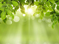 春天好看綠色唯美ppt背景圖片