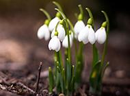 漂亮的白色花朵唯美背景圖片