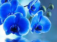 优雅的蝴蝶兰花图片