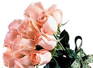 一束美丽诱人的香槟玫瑰图片