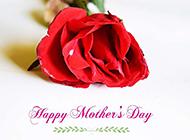 母亲节欧美红玫瑰素材欣赏