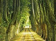 梧桐樹圖片唯美道路風景