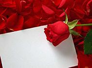 十分鲜艳的红玫瑰卡片