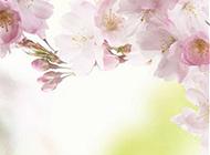 娇嫩粉色桃花图片高清背景