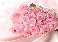 艷粉玫瑰圖片嬌媚欲滴