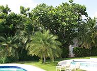 小棕櫚樹圖片生機勃勃