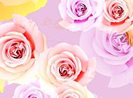 彩色玫瑰花壁纸素材