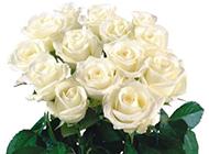 白玫瑰花束高清唯美图片