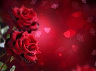 红玫瑰背景素材娇媚艳丽