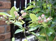绿色植物图片素材精选