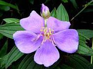 紫色的花图片摄影特写