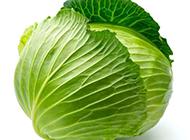 常见的蔬菜卷心菜图片素材