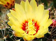 黄色鲜花素雅图片素材