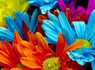 多彩唯美鲜花背景