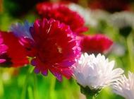 春天鲜花盛开美景图片素材