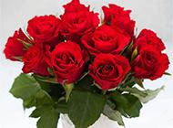 情人节浪漫红玫瑰唯美图片