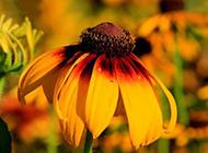 好看的向日葵唯美意境图片