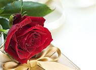 女生最爱的红玫瑰和礼物图片