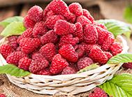 清热解毒的水果红树莓图片欣赏