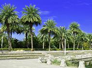 棕櫚樹高清圖片遮陽蔽日