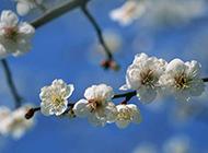 温暖春日的桃花摄影图片
