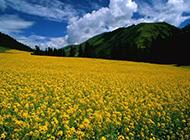 春天最美的油菜花摄影图片