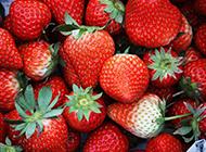 刚采摘的草莓高清图片赏析
