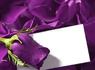 神秘魅力的紫玫瑰圖片