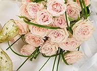 唯美的粉玫瑰高清圖片賞析