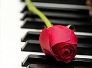 钢琴上的玫瑰花艺术图片欣赏