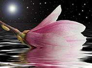 紫玉兰花图片皎洁素雅