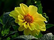 色彩缤纷的鲜花图片素材