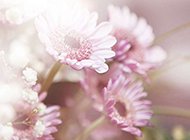 绚丽唯美花朵图片大全