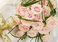 金色絲帶禮物與粉玫瑰圖片