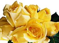 令人如痴如醉的黄玫瑰花束