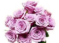 紫玫瑰花圖片唯美背景壁紙推薦
