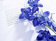 书和花朵唯美意境图片